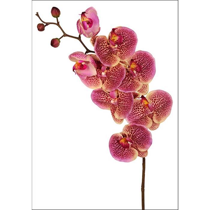 tsveti-rostova-gde-kupit-orhideyu